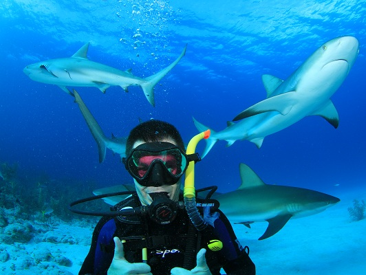 Bahamas: Diving with Sharks